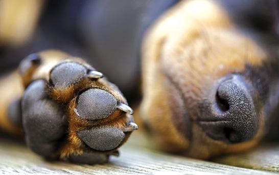 A Dog's Paw