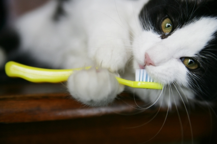 A Cat Holding a Toothbrush