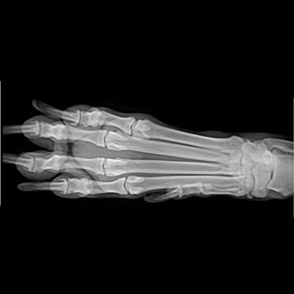A Pet X-Ray