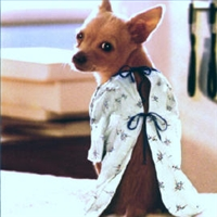 A Dog Wearing a Patient Gown