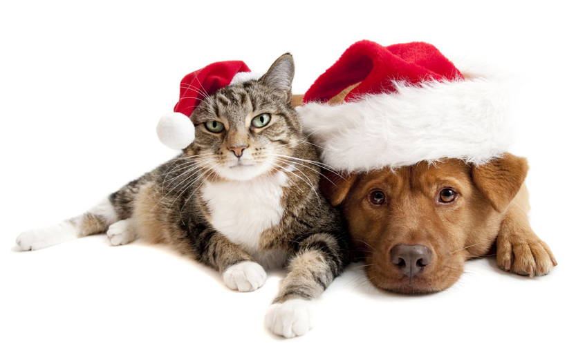 Christmas dangers for your pet