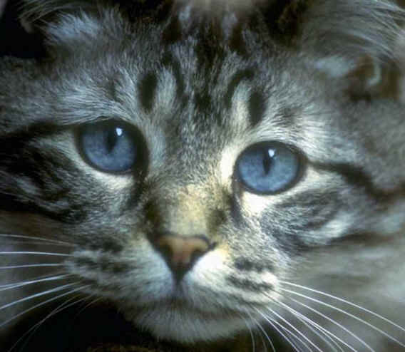 Close up Photo of a Cat