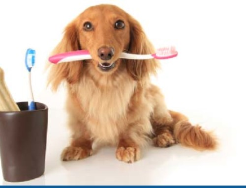 Your pet's teeth are as important as yours!