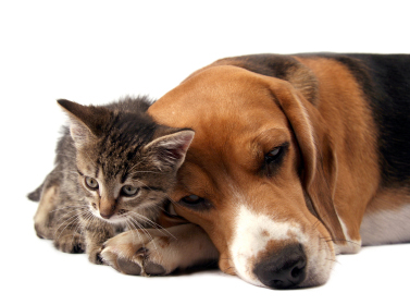 A Dog and Kitten