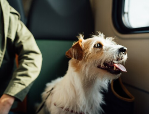 How to Travel to Europe With Your Pet After Brexit