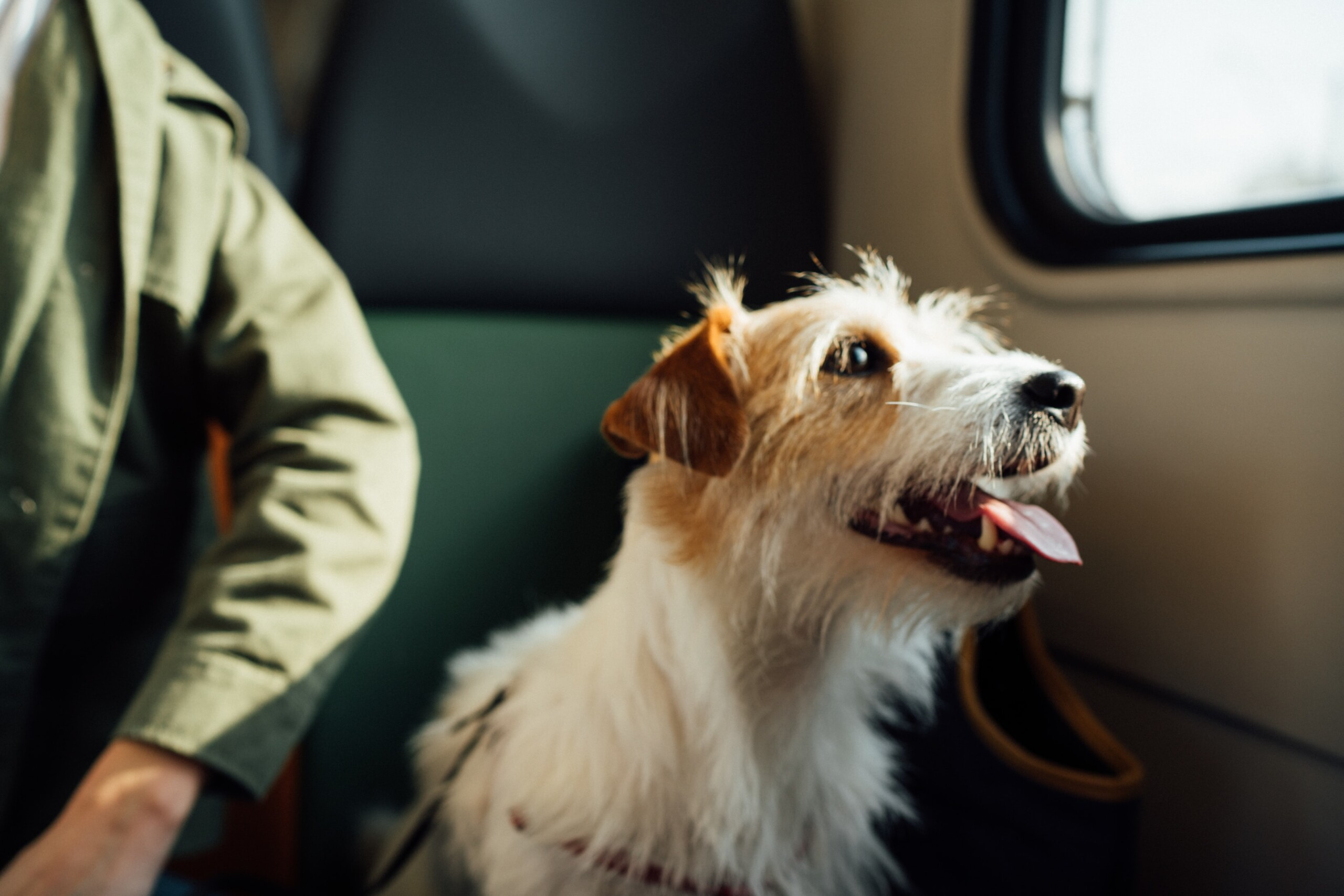 A pet dog travelling on a train