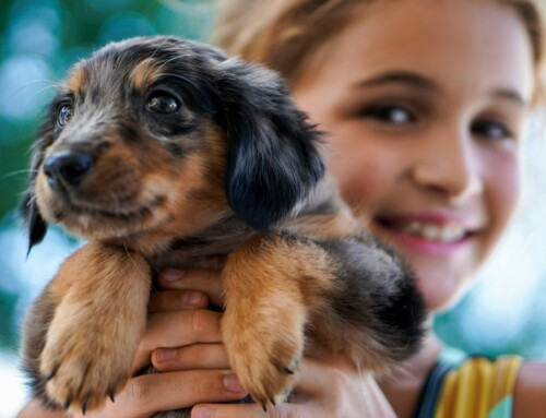 Everything You Need to Know Before Getting a Dog