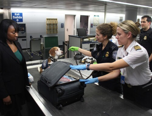 How to Get your Animal Health Certificate for Pet Travel After Brexit