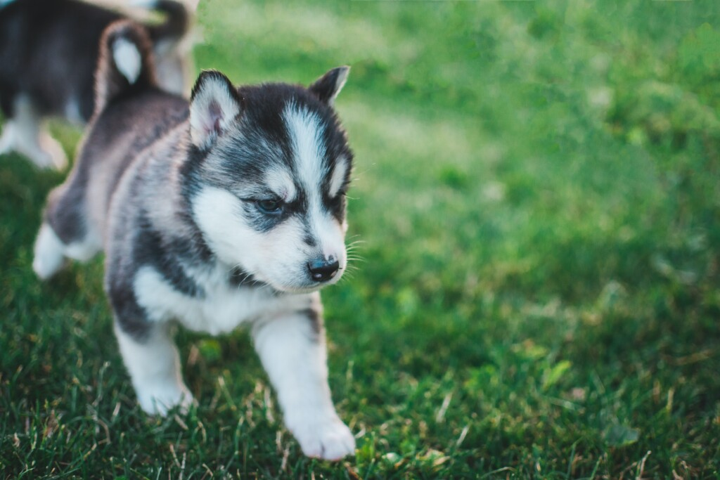 A Puppy on a Walk